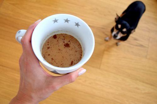 kava,šuo,kofeinas
