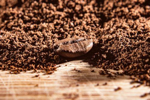 coffee powder bean