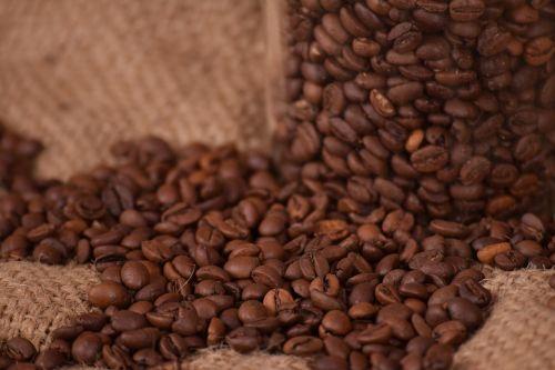 coffee caffeine seed