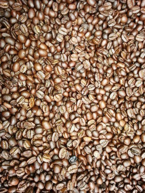 kavos pupelės,švieži kavos,Tanzanija,afrika,ūkininkavimas,švieži miškai,kava,kofeinas,skrudinta,ruda,maistas,tamsi,užvirinti,pupos,skrudinimas,ekologiškas,skonio