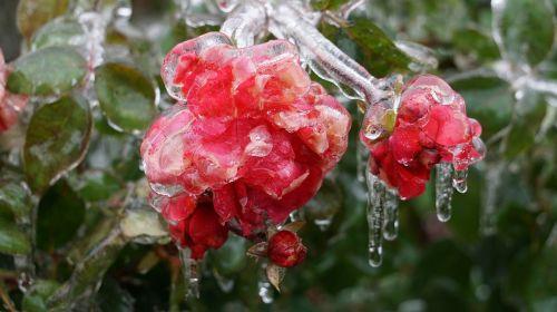cold ice winter