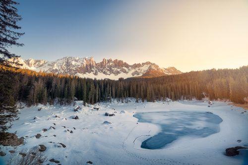 cold conifer fir trees
