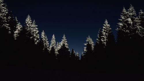 cold dark forest