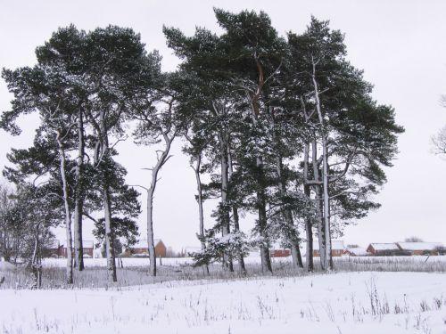 Cold Cold Winter