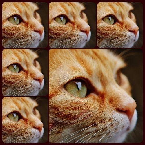 collage cat face