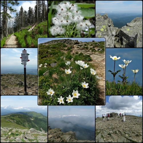 collage babia top mountains
