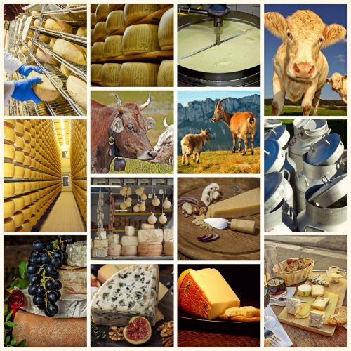 collage cheese milk product