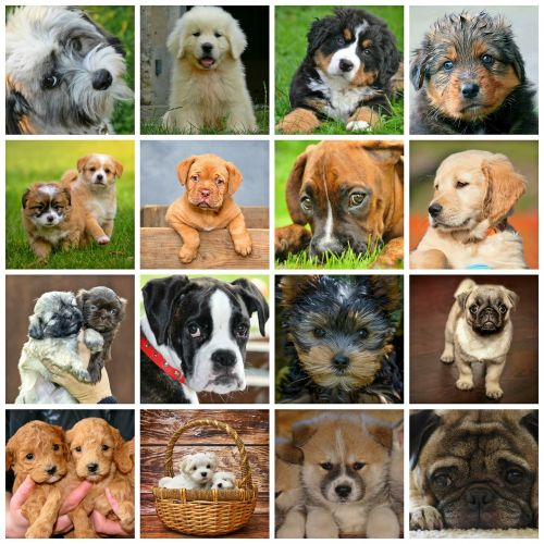 collage dogs animals