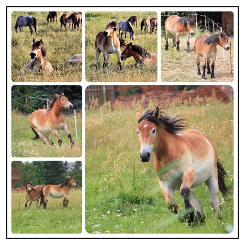 collage photo collage horses