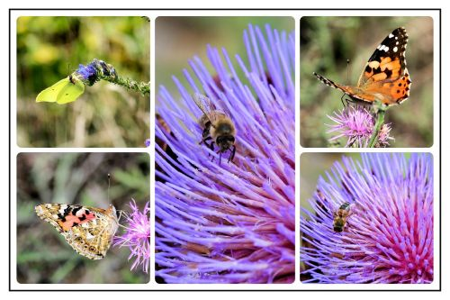 collage photo collage butterflies