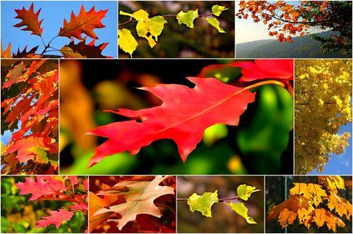 collage autumn foliage