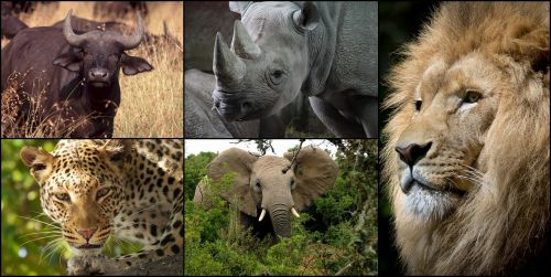 collage africa big 5