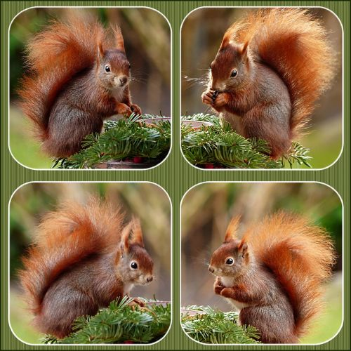 collage animal squirrel