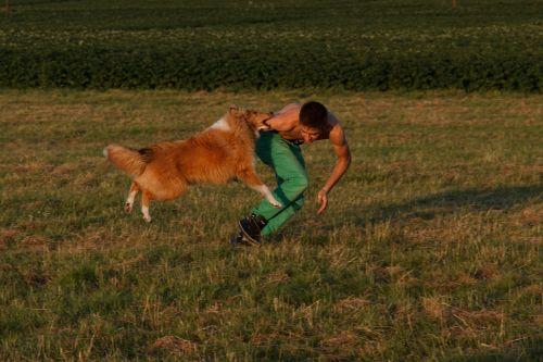 collie dog training dog exercise