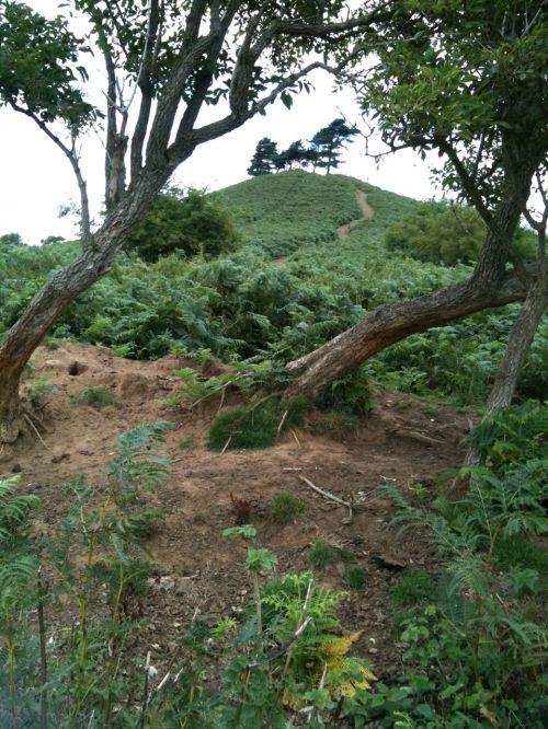 colmer, kalnas, dorset, žalias, medžiai, vaizdas, scena, orientyras, kelias, kalnas, Colmero kalnas