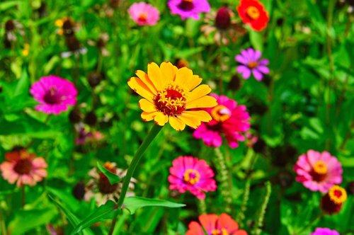 color  summer  summer flowers