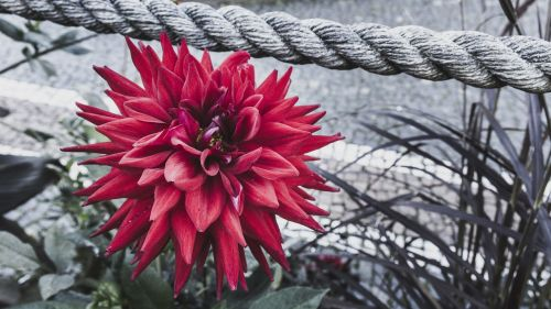 color key red flower rope