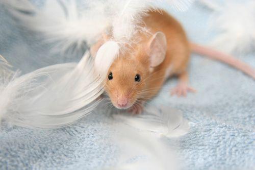 color mouse mouse orange