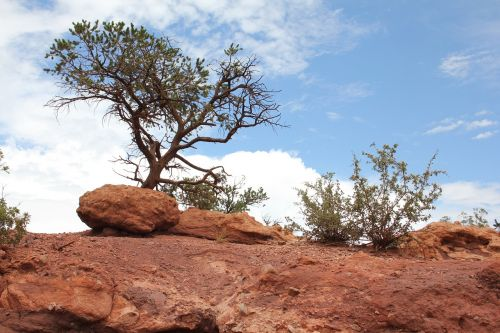 colorado landscape rock