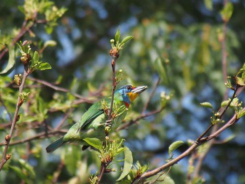 colored birds taipei botanical garden