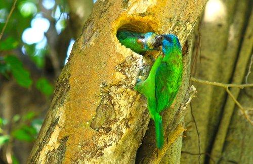 colored birds  bird  feed