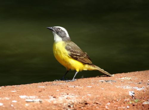 colorful bird bird on the ground tropical