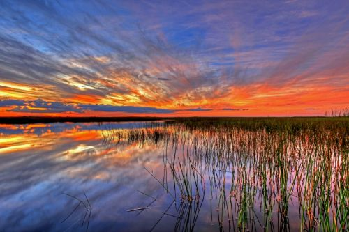 Colorful Everglades Sunset