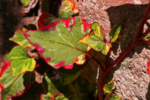colorful leaf leaf colorful