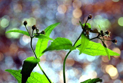 spalvingi augalai,gamtos spalvos,lapija,gamta,spalvingas pasaulis,vaivorykštė,švytėjimas,žalias,piktžolių,grožis