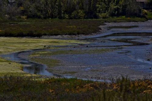 Colorful Wetlands, California