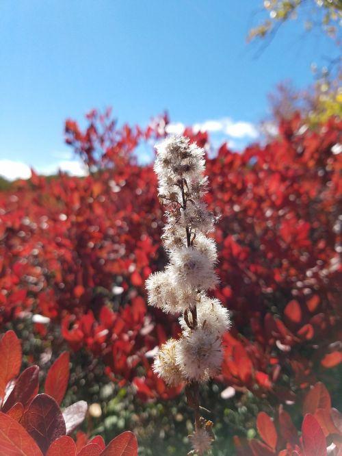 colors flowers cotton