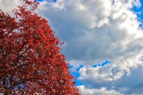 colors autumn foliage