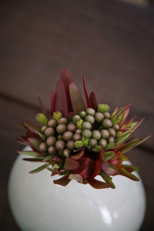 colour flowers function