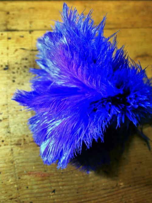 Coloured Ostrich Feathers