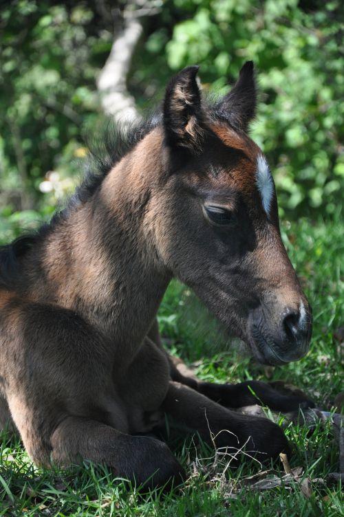 colt horse potranco