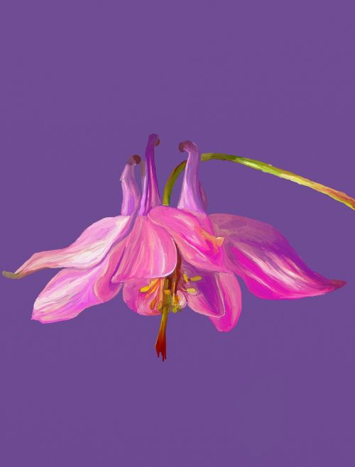 columbine digital flower