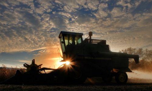 combine soybean harvest sunset