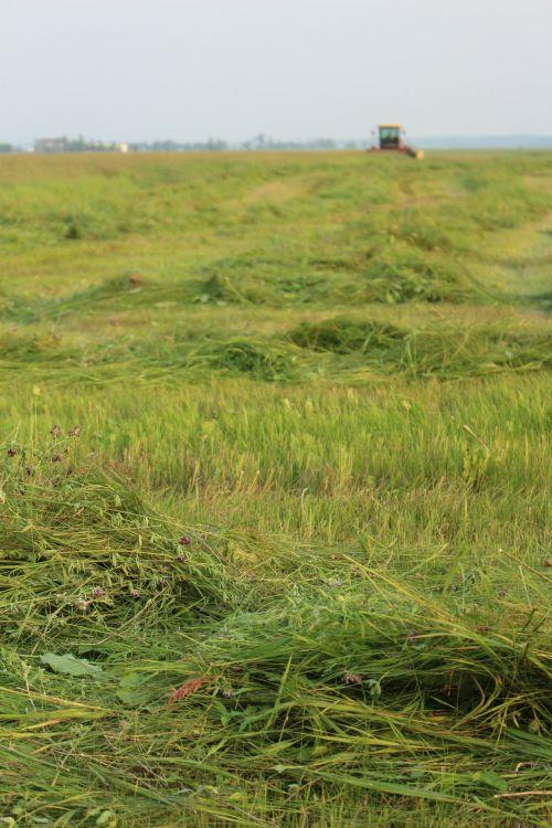 Combine Harvest Farm Crop Cut