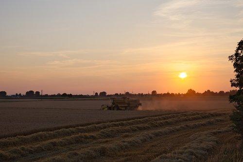 combine harvester  evening  sunset