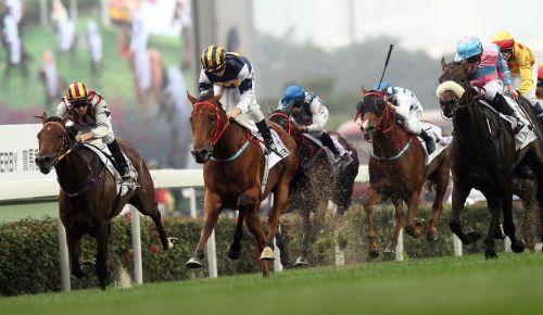 competition horse jockey