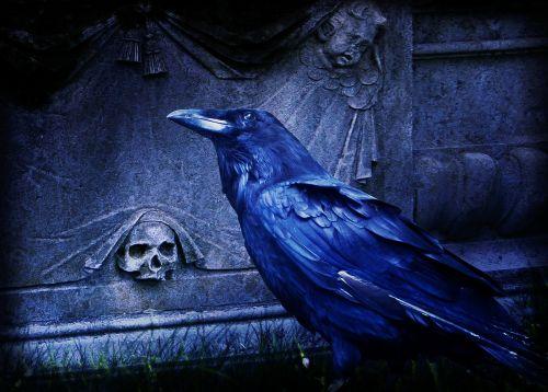 composing raven dark