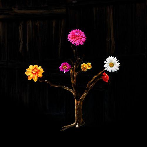 composing flower plant
