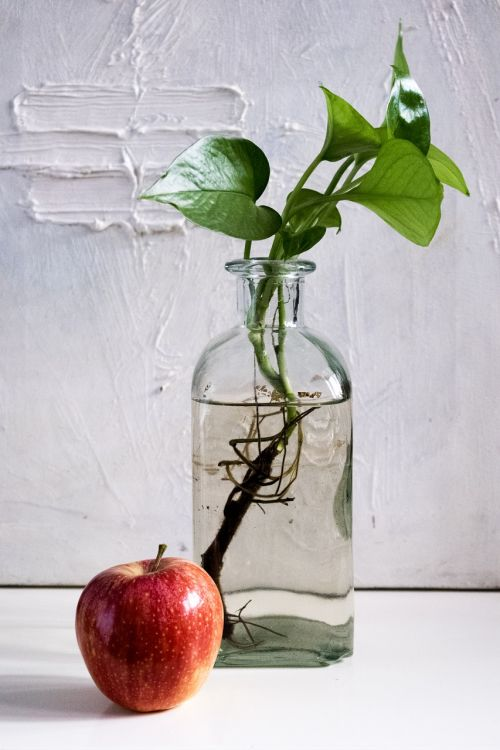 composition apple bottle