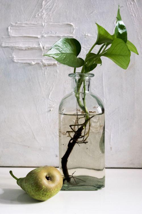 composition pear bottle