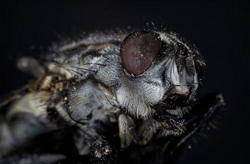 compound  fly  macro