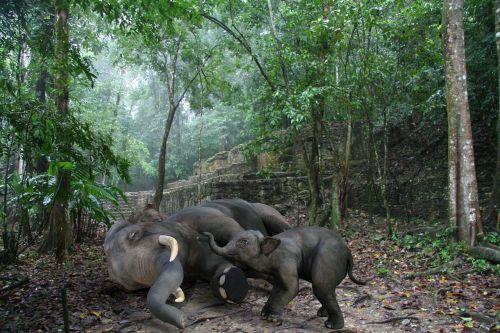 computer art elephants baby elephant