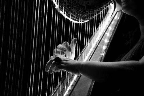 concert harp logo