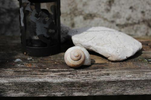 conch stone still life