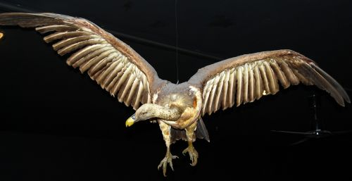 condor bird of prey museum