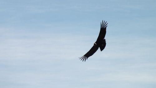 condor peru fly
